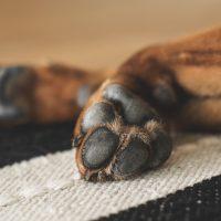 paws-1636271_1920